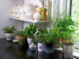 Stvorite mali vrt začinskog bilja u svojoj kuhinji