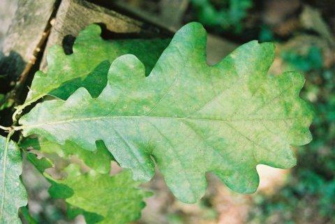 Protiv zagađenja u zatvorenim prostorima: Biljke koje «jedu» otrove
